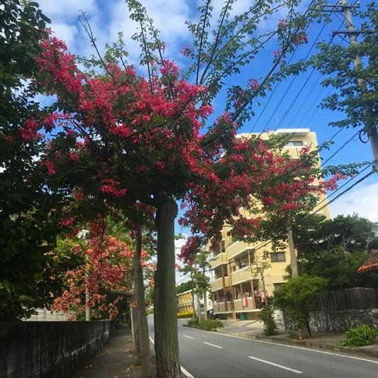ピンクの鮮やかな街路樹